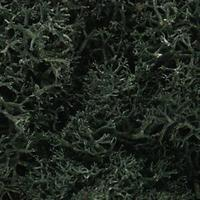 Woodland Lichen Dark Green (1.5 Quarts) Model Railroad Lichen #l164