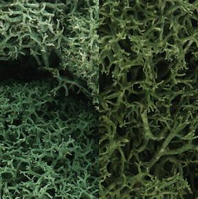 Woodland Lichen Light Green Mix (3 Quarts) Model Railroad Lichen #l167