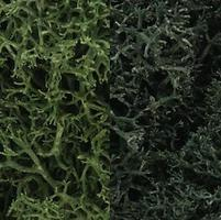 Woodland Lichen Dark Green Mix (3 Quarts) Model Railroad Lichen #l168