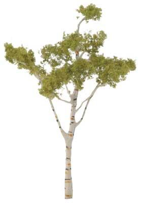 Woodland Scenics Ready Made Premium Trees -- Deciduous -- Paper Birch 4-1/2'' -- Model Railroad Tree -- #tr1616