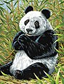 Panda/Bamboo Acrylic Paint by Number 9''x12'' -- Paint By Number Kit -- #12192
