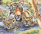 Tiger & Cubs Pencil by Number 11.5''x15.5'' -- Paint By Number Kit -- #51001