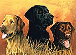 Labrador Dogs in Marsh Acrylic Paint by Number 12''x16'' -- Paint By Number Kit -- #78029
