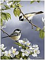 Spring Chickadee Birds Acrylic Paint by Number 9''x12'' -- Paint By Number Kit -- #85008