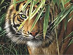 Emerald Forest/ Tiger's Face Acrylic Paint by Number 12''x16'' -- Paint By Number Kit -- #85010
