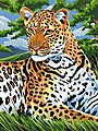 Leopard Acrylic Paint by Number 9''x12''
