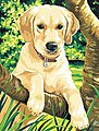 Labrador Acrylic Paint by Number 9''x12'' -- Paint By Number Kit -- #91210