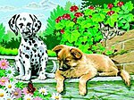 Looks Who is Watching Acrylic Paint by Number 11.5''x15.5'' -- Paint By Number Kit -- #91529
