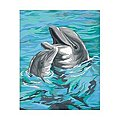 Dolphin Duo -- Paint By Number Kit -- #91148
