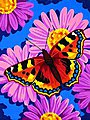 Butterfly Blossom -- Paint By Number Kit -- #91341