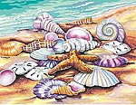Shells (Seashore) -- Paint By Number Kit -- #91526