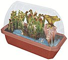 Pitcher Plant Predators Kit