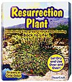 Resurrection Plant Kit