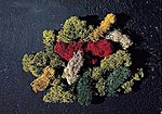 Lichen (5 Assorted Colors) -- Model Railroad Grass Earth -- #170730