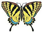 43''x32'' Tiger Swallowtail Butterfly Wing Flagger Kite -- Single-Line Kite -- #842