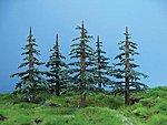 Lodgepole Pine Sml 8/ (8)