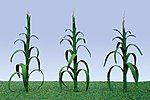 Corn Stalks -- O Scale Model Railroad Farm Scenery -- #95553