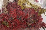 Lichen Mix Colors 1.5-oz