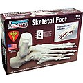 SKELETAL FOOT 1-1
