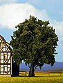 Oak Tree (6.25'') -- Model Railroad Tree -- #21760