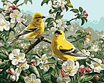 Goldfinches (16''x20'') -- Paint By Number Kit -- #21680