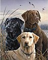 Proud labs (3 Dogs) (16''x20'') -- Paint By Number Kit -- #21759