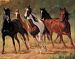 Home Run (Horses Running) (20''x16'') -- Paint By Number Kit -- #21798