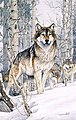 Second Glance (Wolves Snow Scene) (16''x20'') -- Paint By Number Kit -- #22029