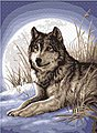Watchful Pause (Wolf Moon Winter Scene) (11''x14'') -- Beginner Paint By Number Kit -- #22055