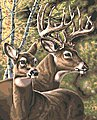 Deer Pair Paint by Number (20''x16'')