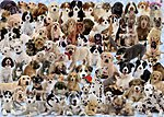 Dogs Galore 1000pcs -- Jigsaw Puzzle 600-1000 Piece -- #15633