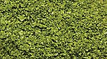 SuperLeaf Shaker spring green -- Model Railroad Ground Cover -- #6122