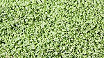 SuperLeaf Shaker pale green -- Model Railroad Ground Cover -- #6212