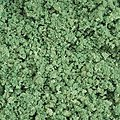 Mid-Summer Green Ground Cover Foliage (Coarse) -- Model Railroad Scenery -- #306