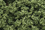 Clump Foliage -- Light Green -- Model Railroad Grass Earth -- #fc682