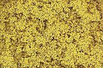 Turf Coarse Fall Yellow 32 oz -- Model Railroad Grass Earth -- #t1353