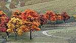 Ready Made Trees Value Pack -- Fall Deciduous Trees 3/4''-2'' (38) -- Model Railroad Tree -- #tr1575