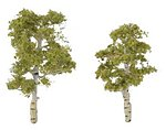 Ready Made Premium Trees -- Deciduous -- Aspen -- 1 Each -- - 2-1/4 & 2-3/4'' -- Model -- #tr1612