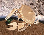 Stone Crab (11'' Long) -- Wooden 3D Jigsaw Puzzle -- #1253