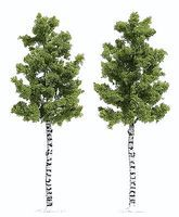 Busch Deciduous Tree - White Birch 6-1/2 16.5cm Tall pkg(2) HO Scale Model Railroad Tree #6796