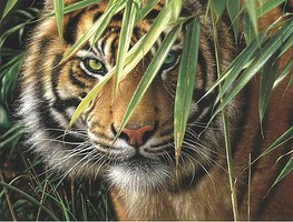Colart Emerald Forest/ Tigers Face Acrylic Paint by Number 12x16 (Replaces #85010)