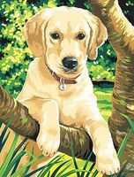 Colart Labrador Acrylic Paint by Number 9x12 Paint By Number Kit #91210