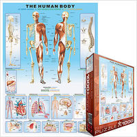 EuroGraphics The Human Body with Systems & Senses (1000pc) Jigsaw Puzzle 600-1000 Piece #61000