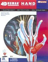 4D-Vision Visible Hand Anatomy Kit