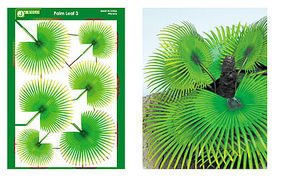 JsWorks Multi-Scale Palm Fan Leaves (Colored Paper)