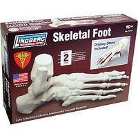 Lindberg SKELETAL FOOT 1-1