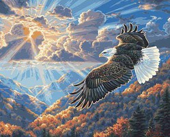 Plaid Eagle Freedom Paint by Number (20x16)
