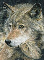 Royal-Brush Curious Eyes (Wolf) Pencil by Number Age 8+ (8.75x11.75)