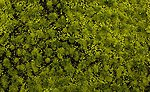 Tufted Grass Mat Light Green -- Model Railroad Scenery Grass and Earth -- #32921