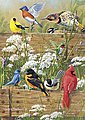 Hautman Songbird Menagerie 300pcs -- Jigsaw Puzzle 0-599 Piece -- #2496